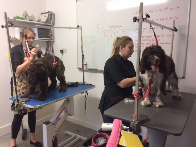 Dog Grooming Courses Portsmouth